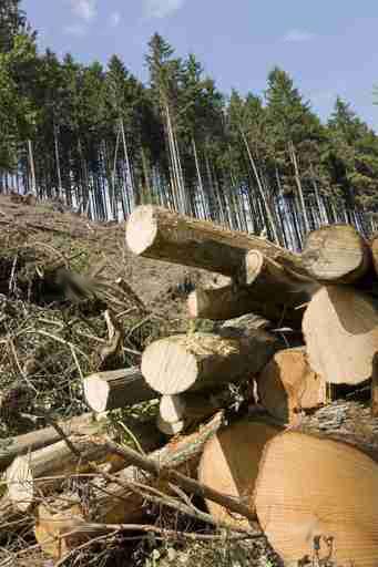 Holzstapel: Rohmaterial für Pellets